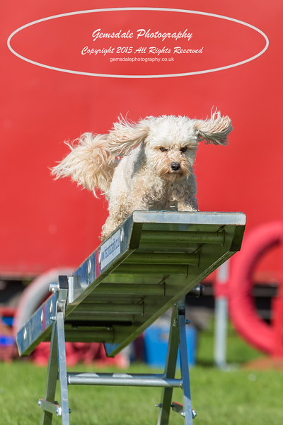 KC Southdowns Agility September 2015 -7000-2