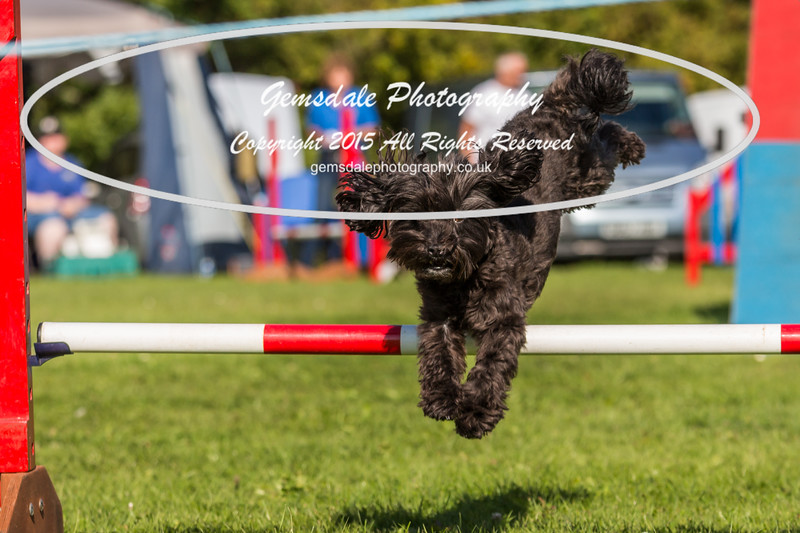 KC Southdowns Agility September 2015 -7005