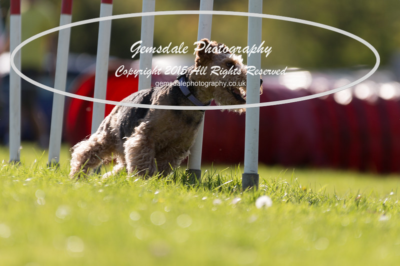 KC Southdowns Agility September 2015 -7043