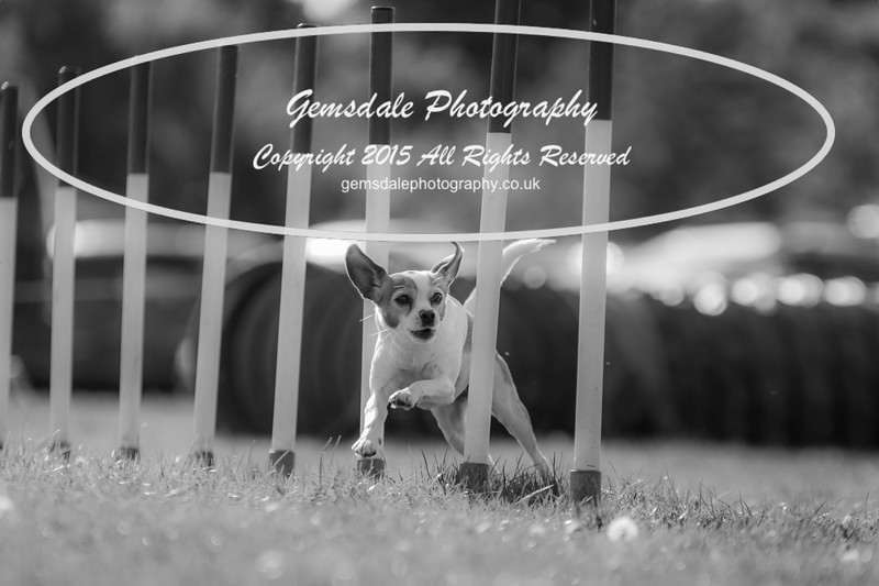 KC Southdowns Agility September 2015 -7030