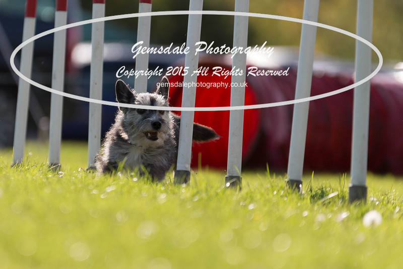 KC Southdowns Agility September 2015 -7036