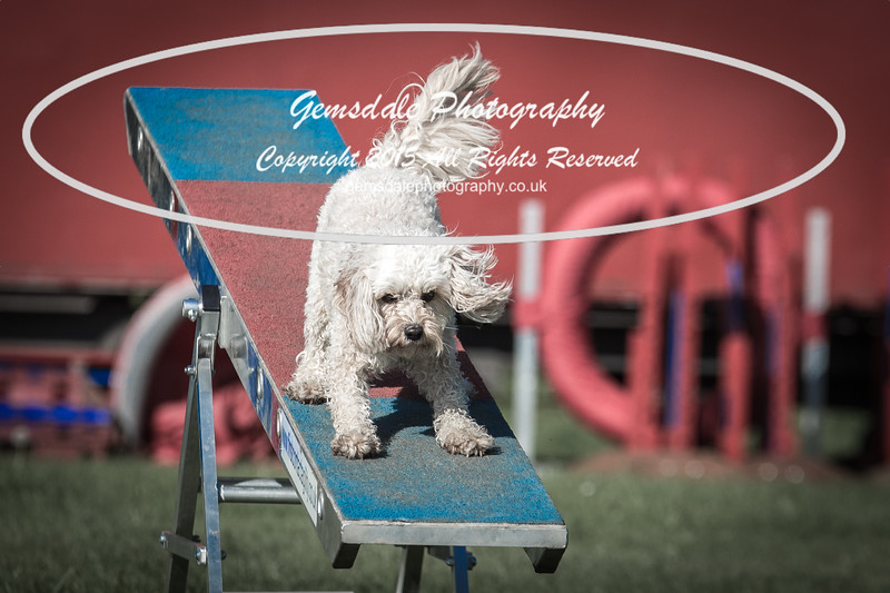 KC Southdowns Agility September 2015 -7001