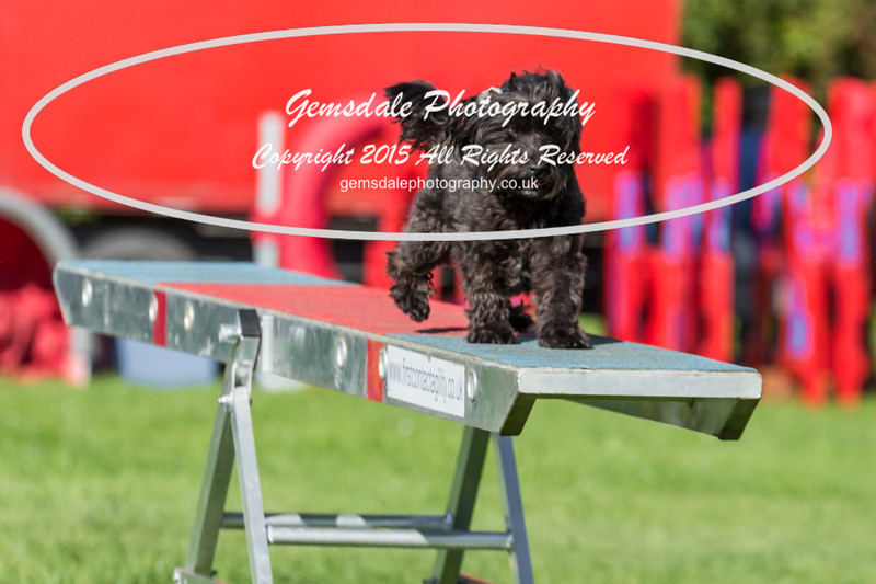 KC Southdowns Agility September 2015 -7007