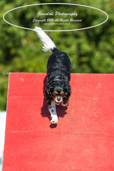 KC Southdowns Agility September 2015 -7009