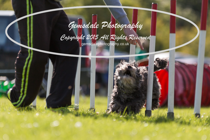 KC Southdowns Agility September 2015 -7023