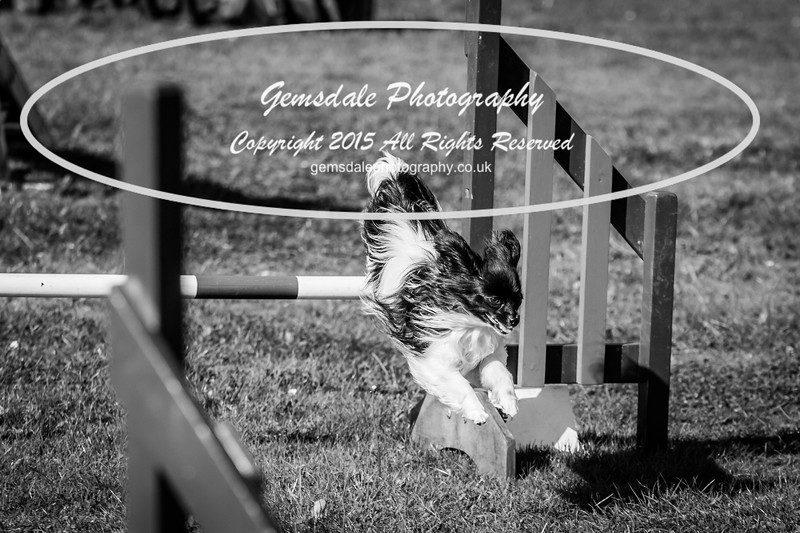KC Southdowns Agility September 2015 -7017