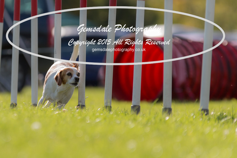KC Southdowns Agility September 2015 -7029