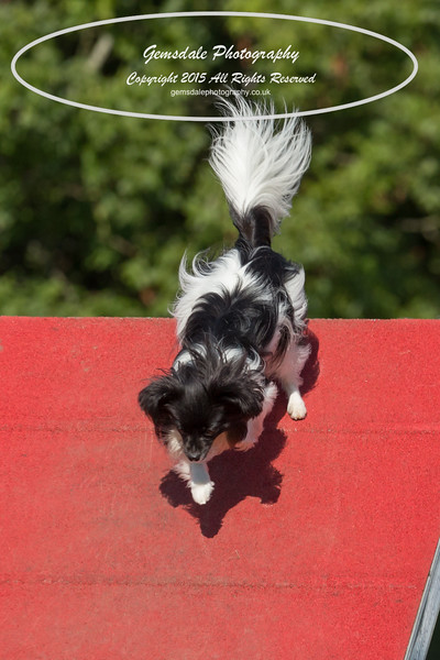 KC Southdowns Agility September 2015 -7015