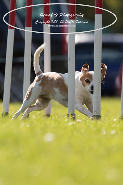 KC Southdowns Agility September 2015 -7027