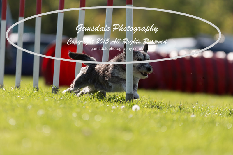 KC Southdowns Agility September 2015 -7037