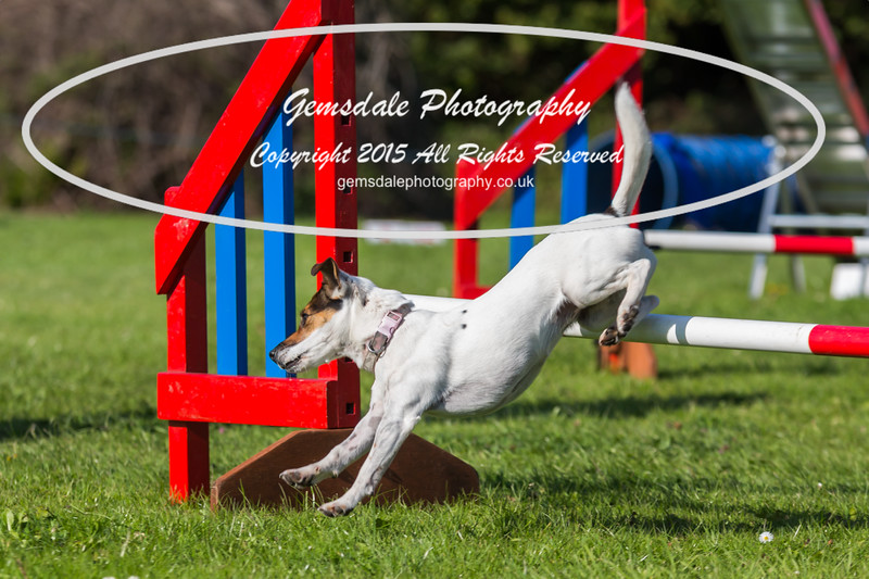 KC Southdowns Agility September 2015 -7019