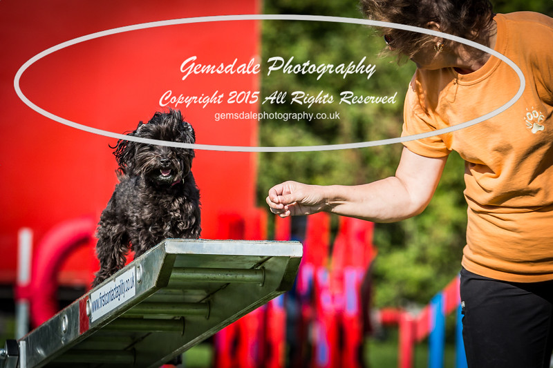 KC Southdowns Agility September 2015 -7006