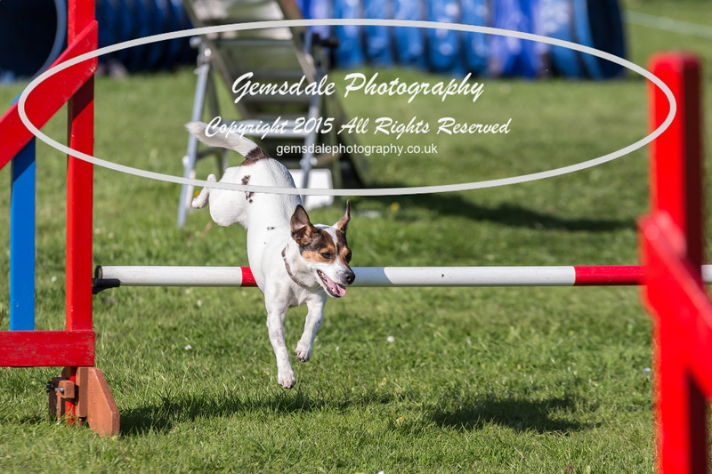 KC Southdowns Agility September 2015 -7021