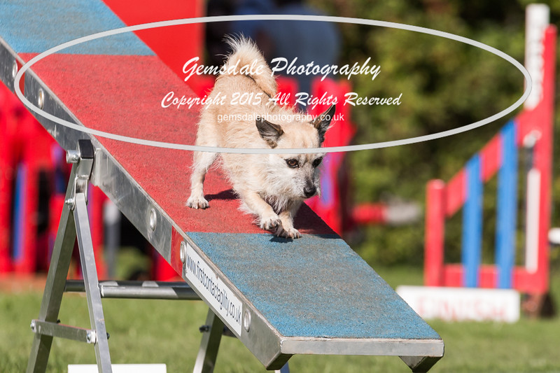 KC Southdowns Agility September 2015 -7014