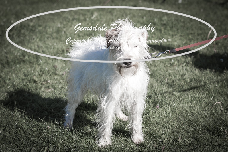 KC Southdowns Agility September 2015 -7012