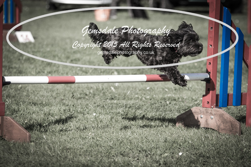 KC Southdowns Agility September 2015 -7008