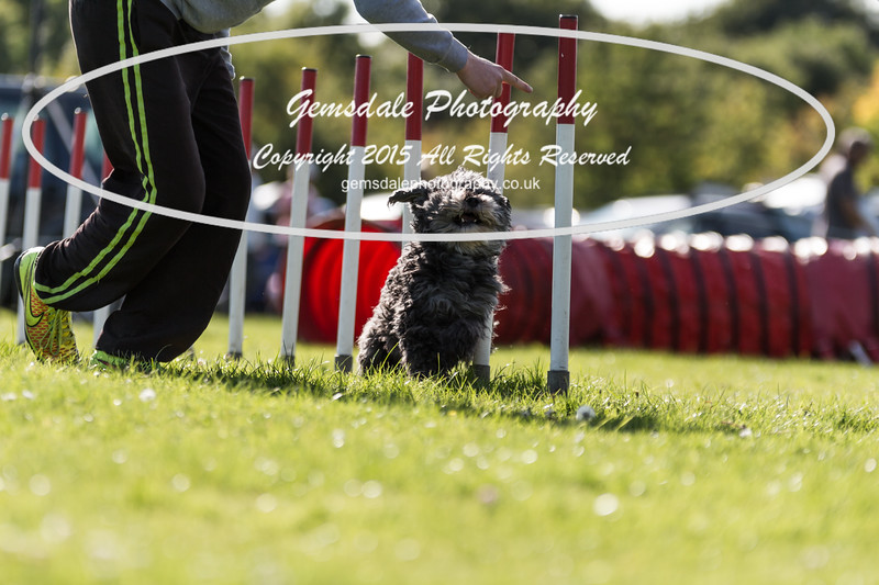 KC Southdowns Agility September 2015 -7025