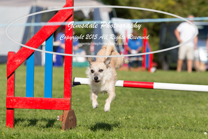 KC Southdowns Agility September 2015 -7013