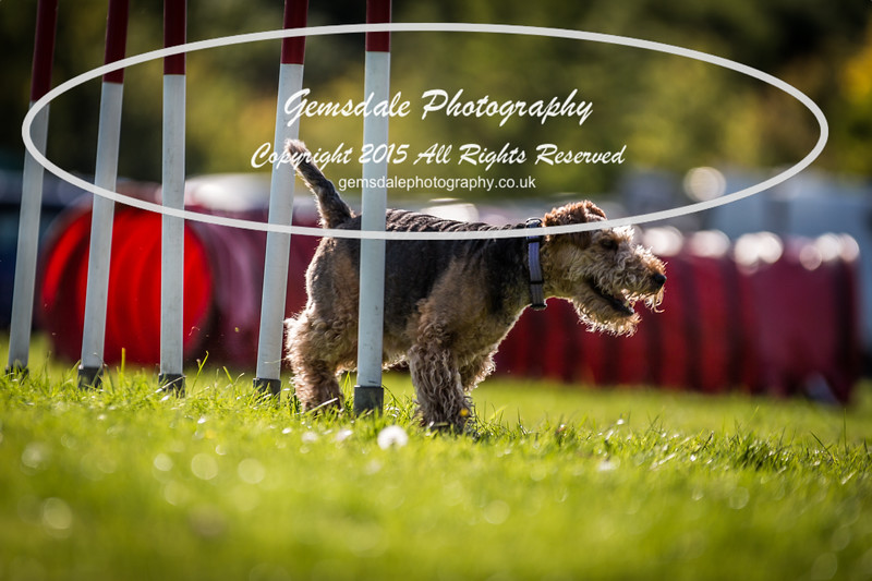 KC Southdowns Agility September 2015 -7044