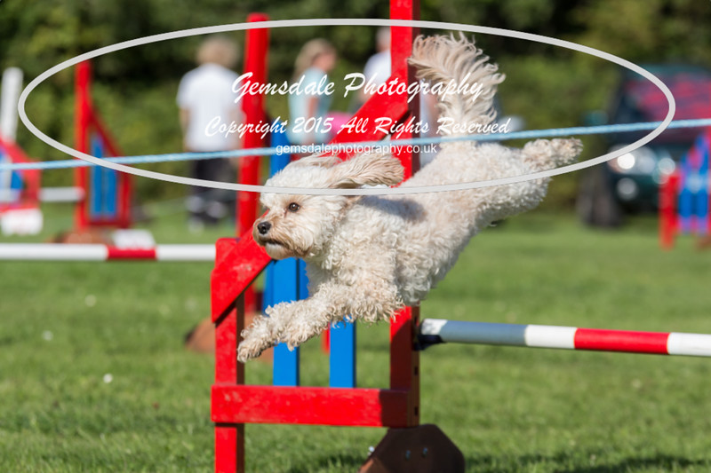 KC Southdowns Agility September 2015 -7002