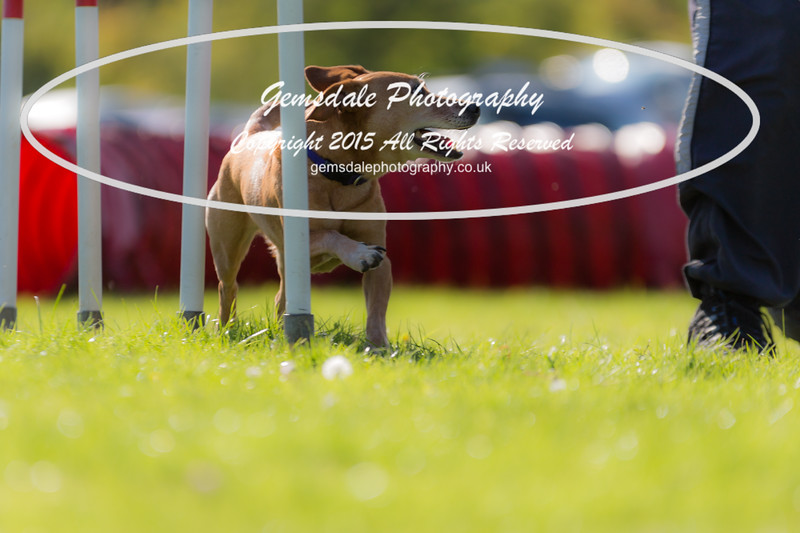 KC Southdowns Agility September 2015 -7032-2