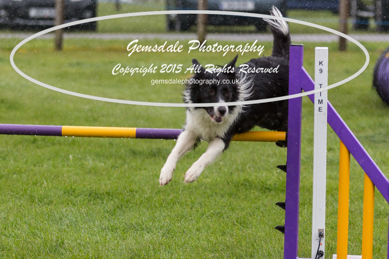 GT Agility Sunday May 3rd-2006
