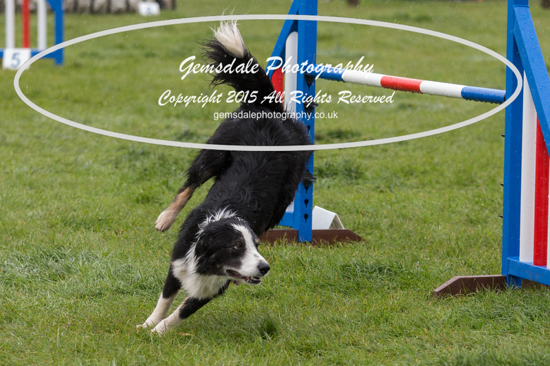 GT Agility Sunday May 3rd-2058