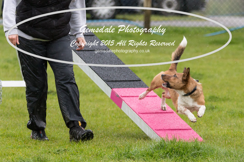 GT Agility Sunday May 3rd-2016
