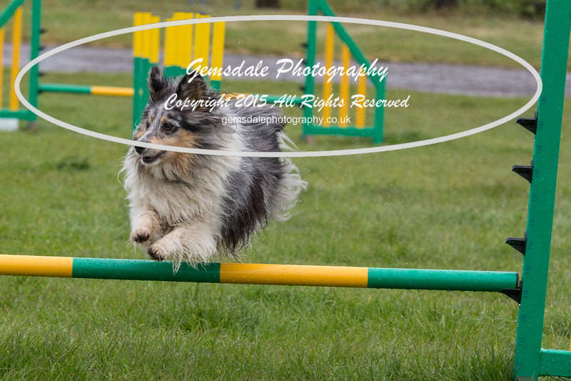 GT Agility Sunday May 3rd-2052