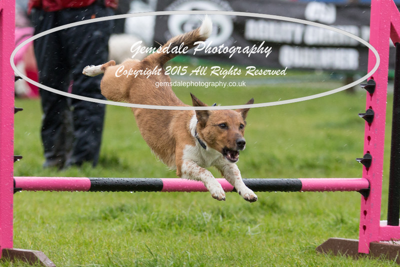 GT Agility Sunday May 3rd-2018