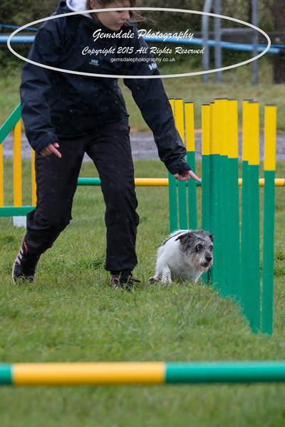 GT Agility Sunday May 3rd-2053