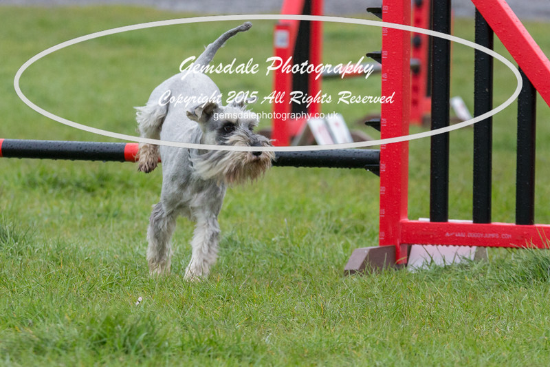 GT Agility Sunday May 3rd-2063