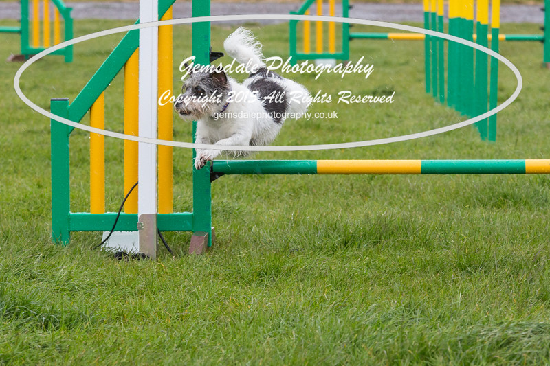 GT Agility Sunday May 3rd-2057