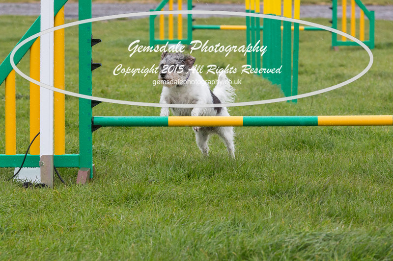 GT Agility Sunday May 3rd-2056