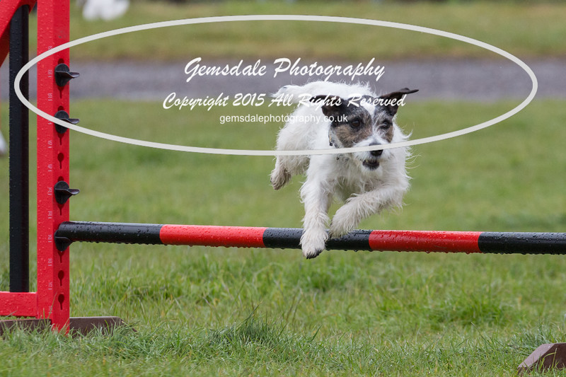 GT Agility Sunday May 3rd-2069