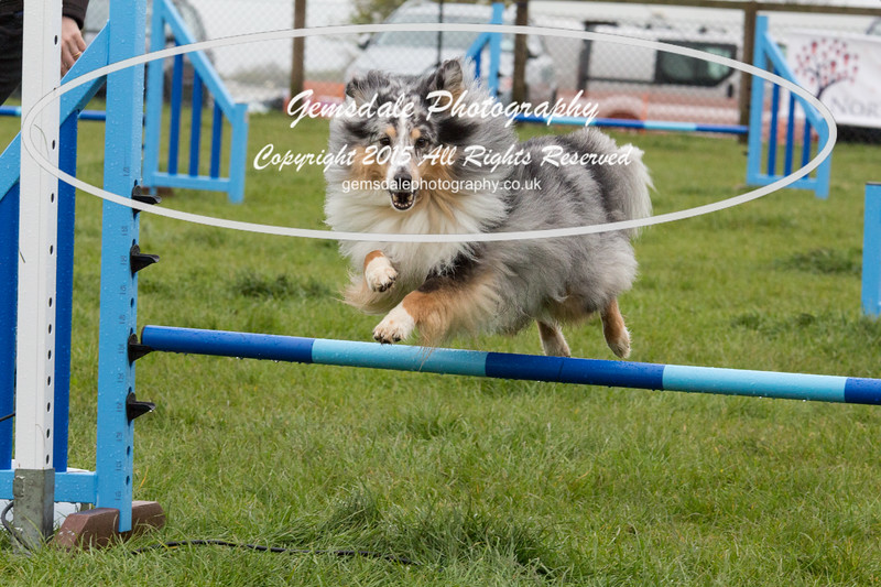 GT Agility Sunday May 3rd-2061
