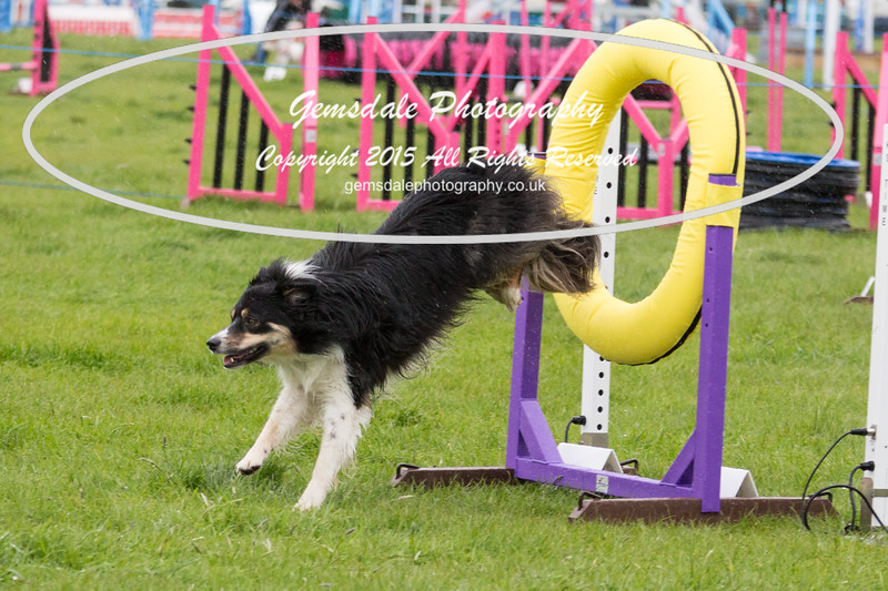 GT Agility Sunday May 3rd-2011