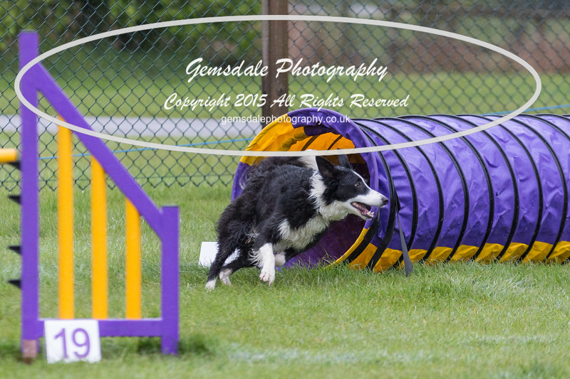 GT Agility Sunday May 3rd-2013