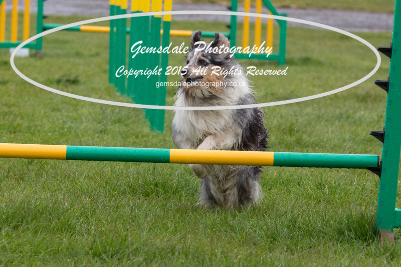 GT Agility Sunday May 3rd-2051