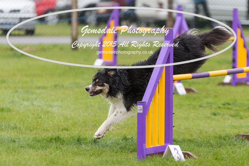 GT Agility Sunday May 3rd-2012