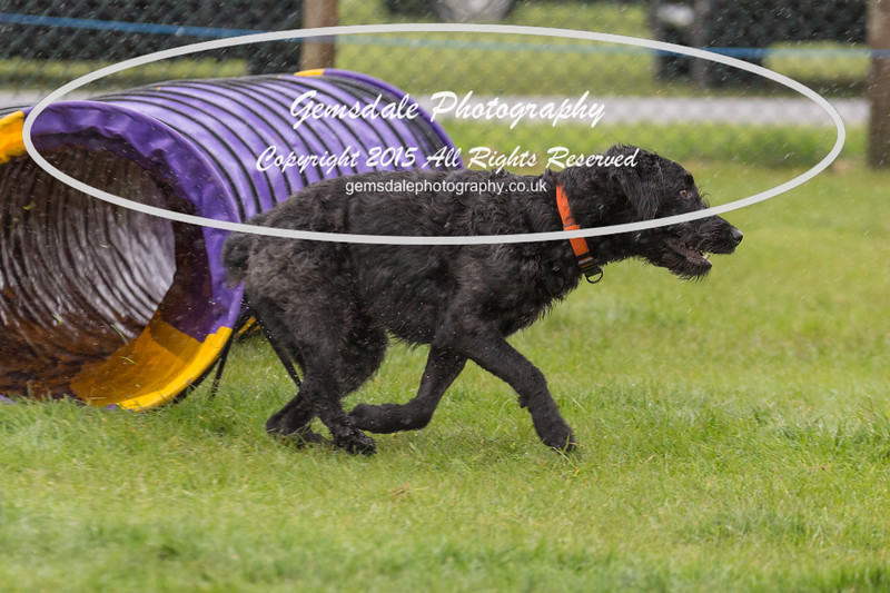 GT Agility Sunday May 3rd-2009