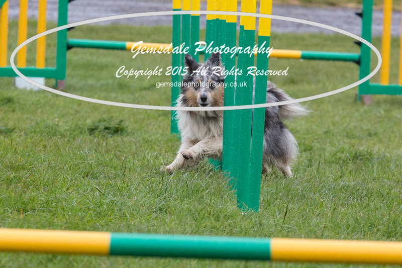 GT Agility Sunday May 3rd-2047
