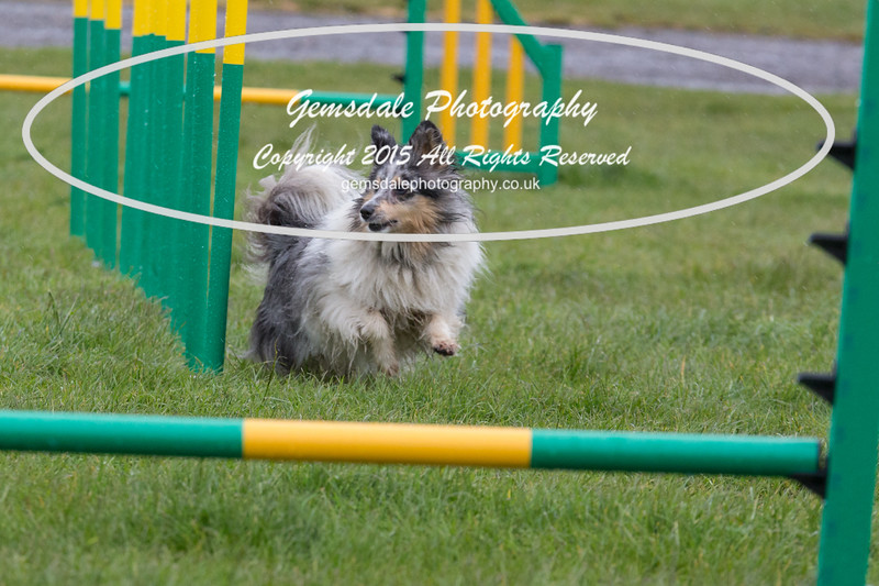GT Agility Sunday May 3rd-2050