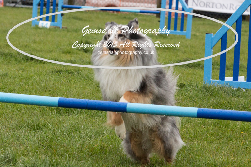 GT Agility Sunday May 3rd-2060