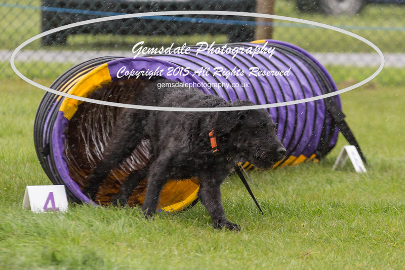 GT Agility Sunday May 3rd-2008