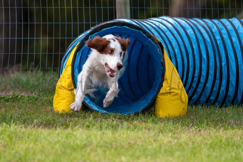 NorAust Agility 11-27 to 11-29
