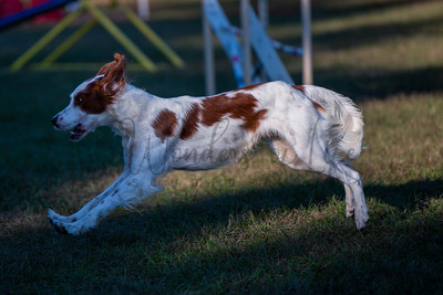 NorAust CPE Agility Events Sat