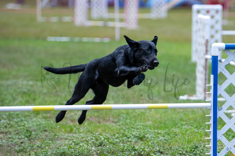 Noraust Agility 4-31 to 5-2-21