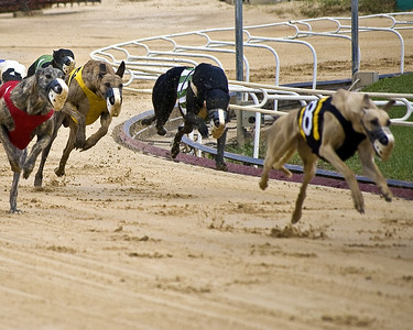 I was amazed, when I looked at the photos, how little of the dog touches the track.