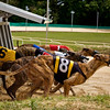 I hope your money's not on the #6 dog.